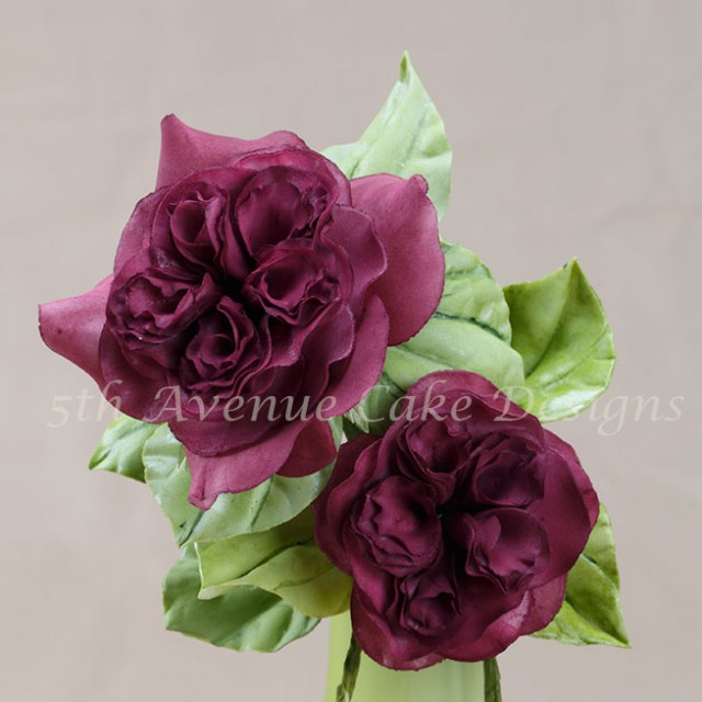 Heirloom english sugar rose