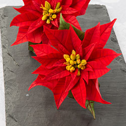 FlowerPastePoinsettias00_250